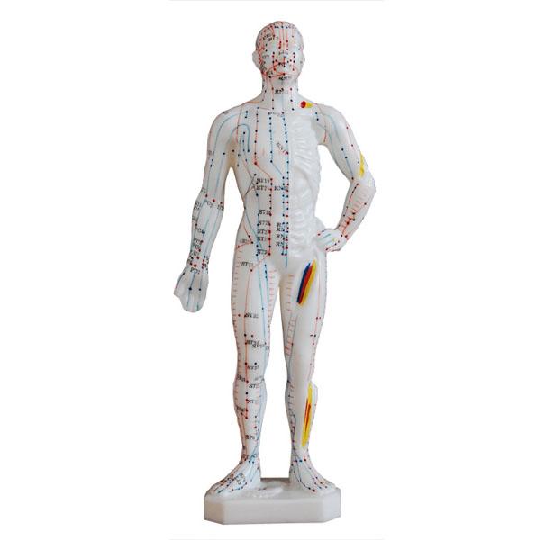 人体针灸模型(男性)高26cm