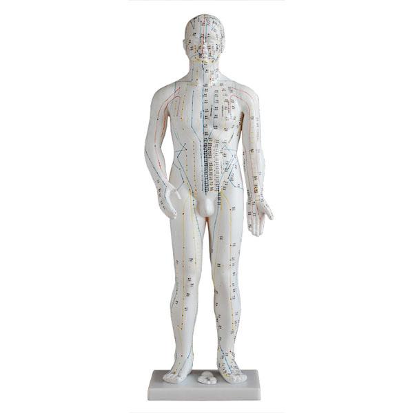 人体针灸模型(男性)70cm